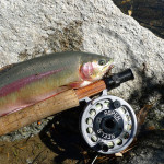 Wheeling and Reeling the Eastern Sierras